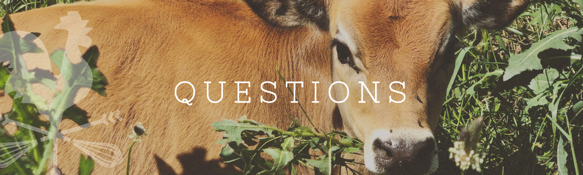 Frequently Asked Questions • The Kitchen at Middleground Farms